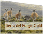 gold of tierra del fuego